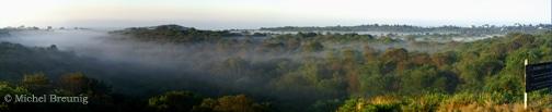 Rodman's-Fog